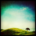 The Lonely Tree - Ohariu Valley