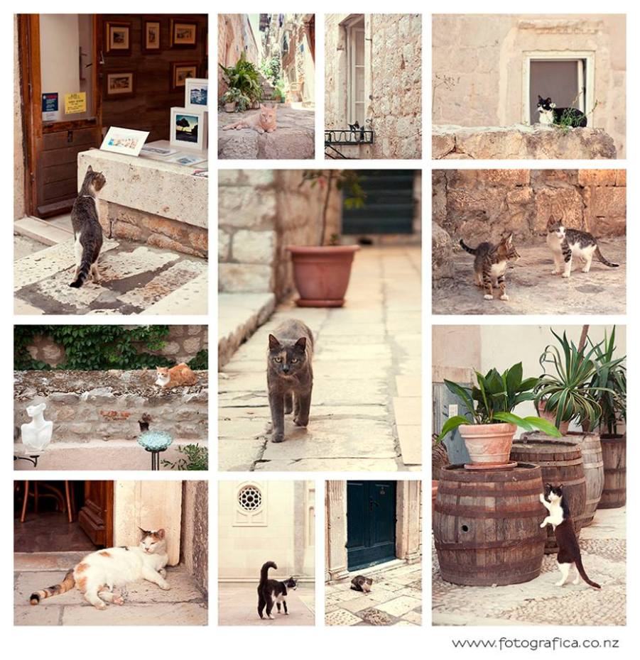 Cats of the Old City (Web)